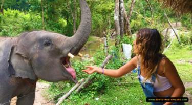 woman feeding elephant
