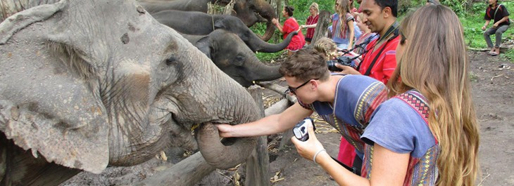 photo ops with elephants