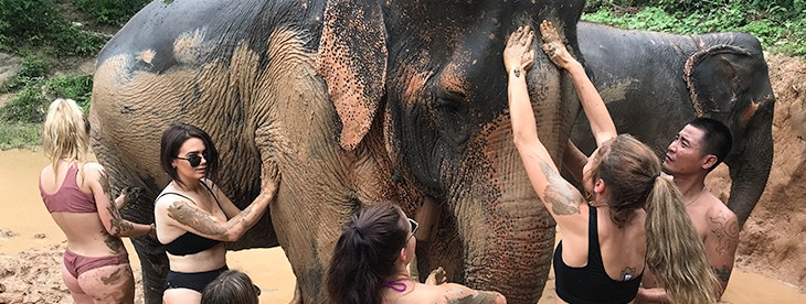 Chiang Mai Elephant and Trekking Mud Spa
