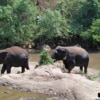 Elephant near the river