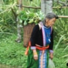 elder hmong woman carrying fresh produces on back