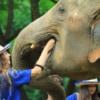 young lady feeding an elephant