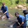 bathing elephant in river