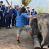 group of people learning elephant commands