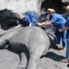 women enjoying giving elephant mud spa