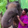 bonding with elephant in special mahout uniform