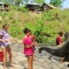 feeding elephants bananas by hand