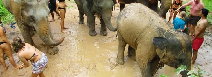 elephant mud spa