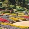 chiang rai doi tung mae fah luang garden