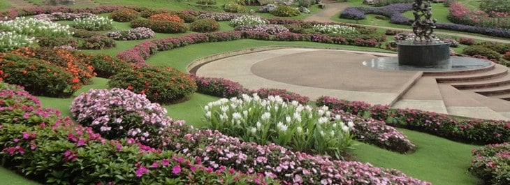 variety of flowers and plants at doi tung park