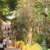 grand staircase with over 300 steps at doi suthep temple