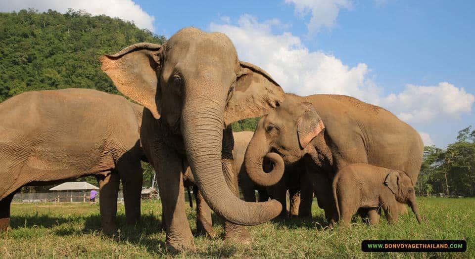 elephant-nature-park-6