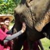 women bonding with elephant