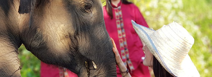 close of woman bonding with elephant