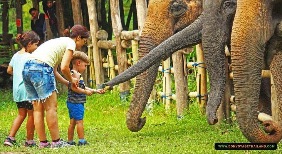 elephant-valley-chiang-rai-1