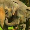 elephants roaming freeing in forest