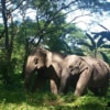 a pair of elephants roaming freeing in forest