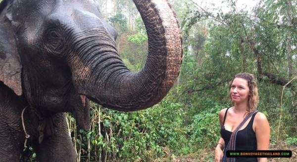 lady looking at elephant in forest