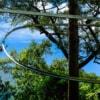 jungle flight zip line roller coaster