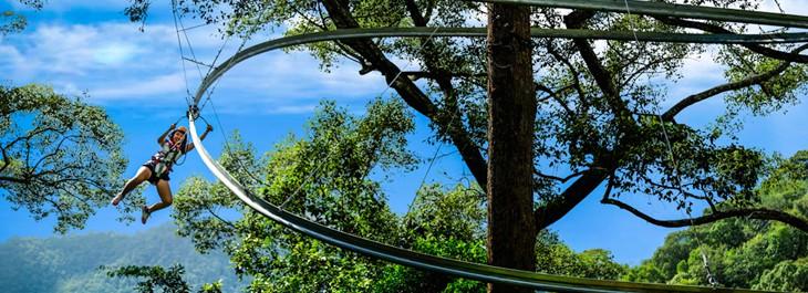 jungle flight zipline roller coaster