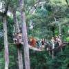 jungle flight sky bridge