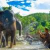 bathing elephants at kanta elephant sanctuary