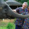 men feeding elephants