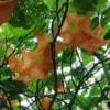 exotix flowers
