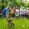 group of people learning how jasmine rice at rice paddy is cultivated