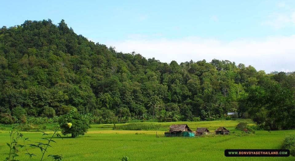 mae-wang-trekking-hug-elephant-sanctuary-1