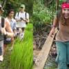 trekking through rice paddy in mae wang