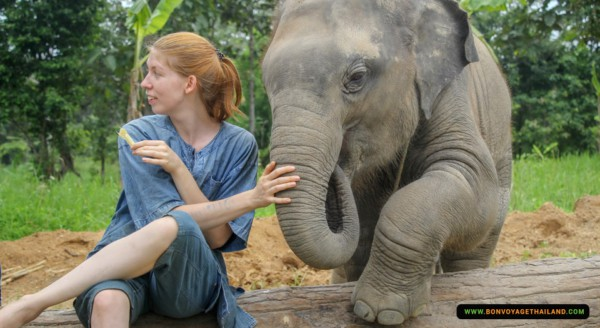 young woman touching elephant