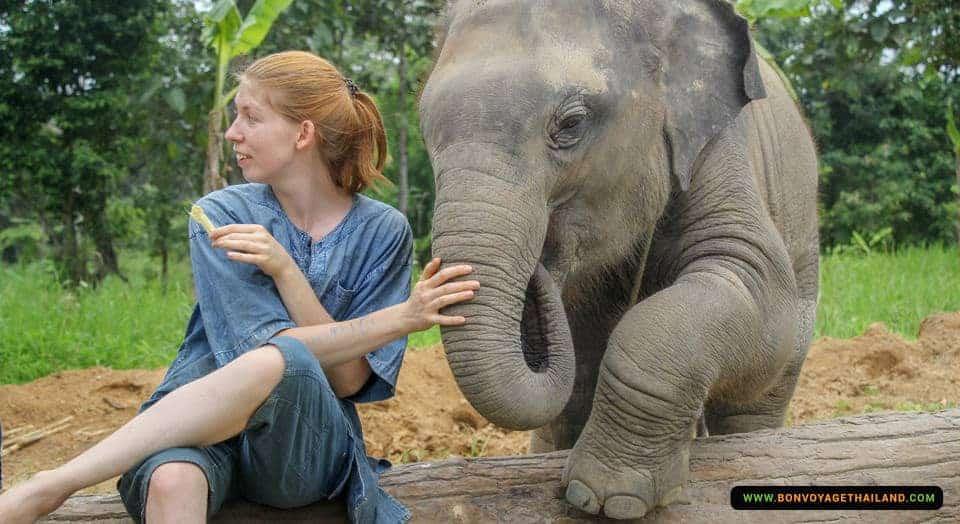 maerim-elephant-sanctuary-2
