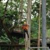 quick jump at pongyang jungle coaster zipline
