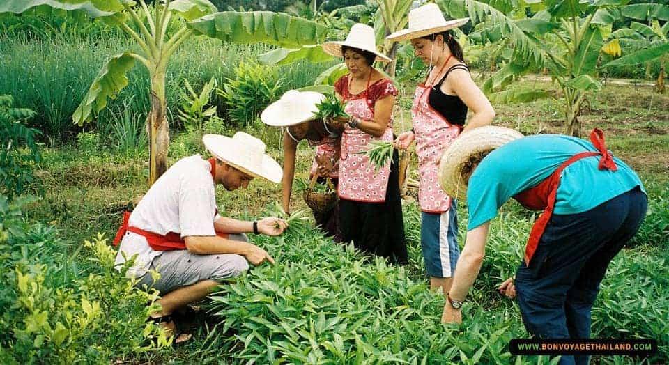 thai-farm-cooking-school-5