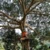 zipline platform on yang tree
