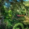 skyline zipline platform on tree in jungle