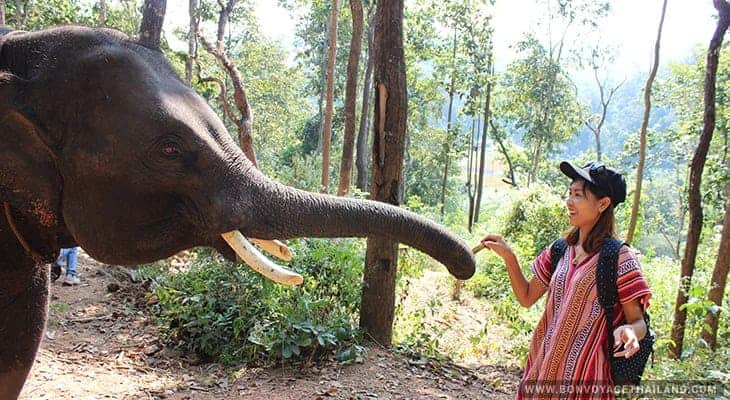 young woman bonding with elephant at hug elephant sanctuary