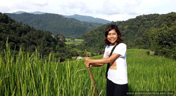 trekking through rice paddy on doi inthanon
