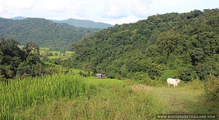 pha dok siew mini trekking trail