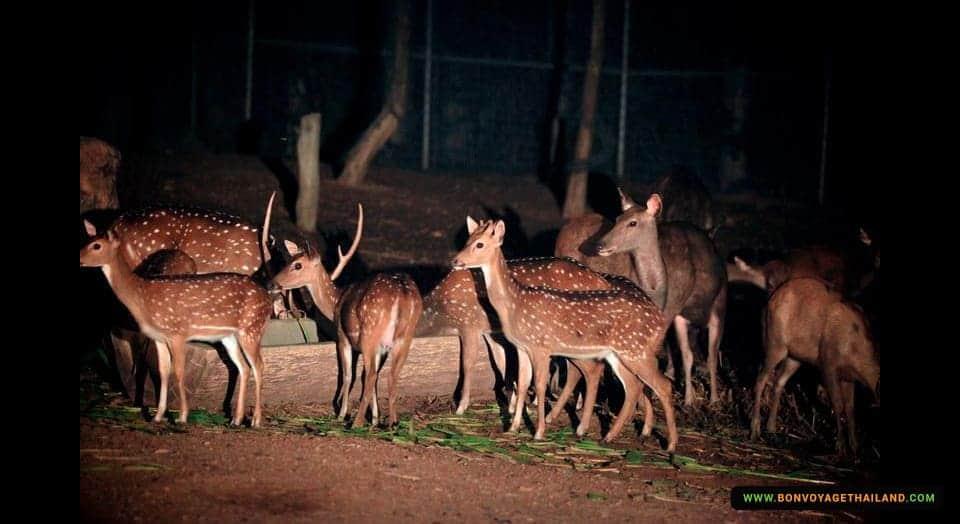 chiang-mai-night-safari-3