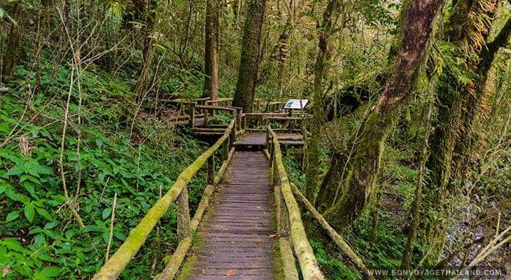 ang ka luang nature trail on doi inthanon