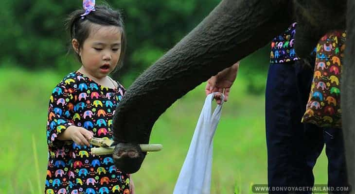 young girl feeding elephant sugarcane at elephant sanctuary