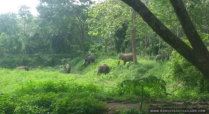 elephants roaming in the jungle