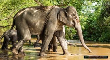 elephants walking through shallow creek