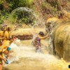group of young people giving elephant a bath in river