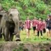 group of people in karen costumes walking alongside elephants