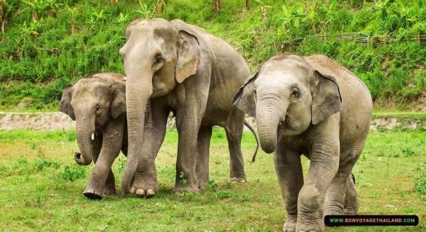 elephants roaming in a field