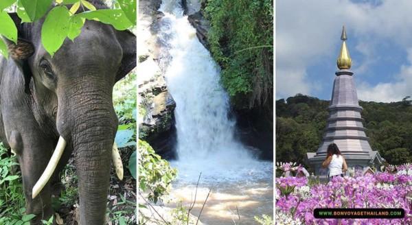 Elephant Sanctuary + Mae Wang Waterfall + Doi Inthanon National Park