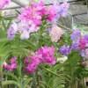 Orchid Farm - Multicolor